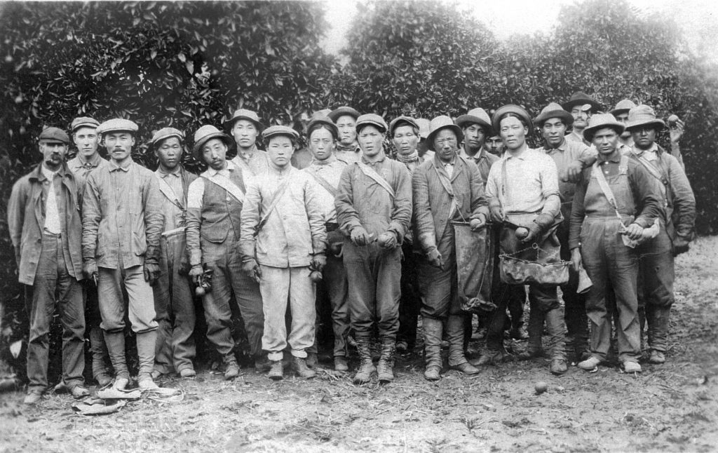An Chang Ho, Kap Suk Cho and other workers at Riverside orange orchard