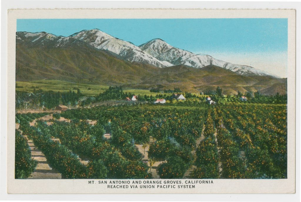 Mt. San Antonio and Orange Groves, California, reached via Union Pacific System