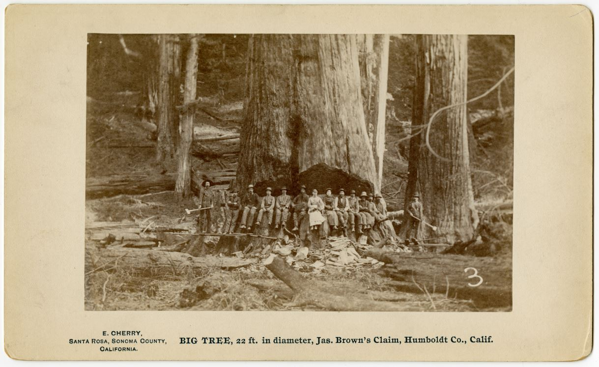Spotlighting the Use of Primary Sources in Teaching California