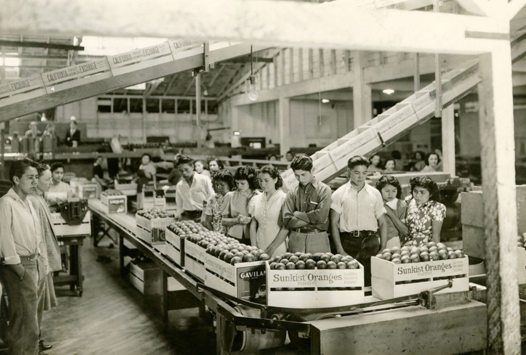 Visiting a fruit packing house