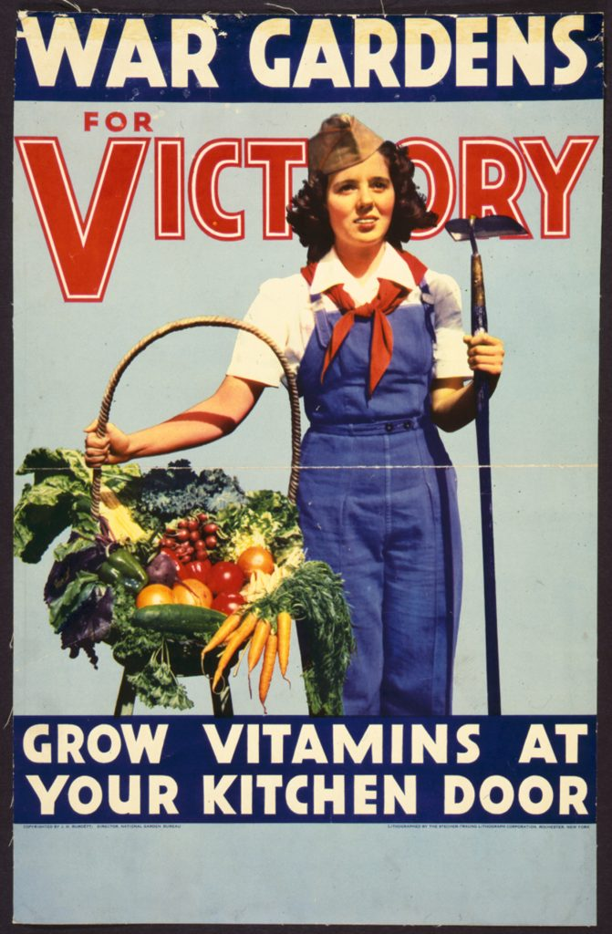12E.1.4 War gardens for victory–Grow vitamins at your kitchen door